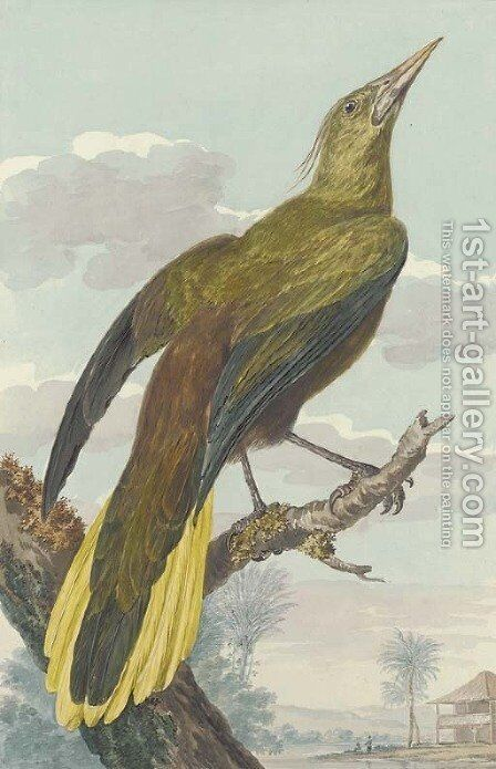 A bird of paradise in an exotic landscape by Aert Schouman - Reproduction Oil Painting