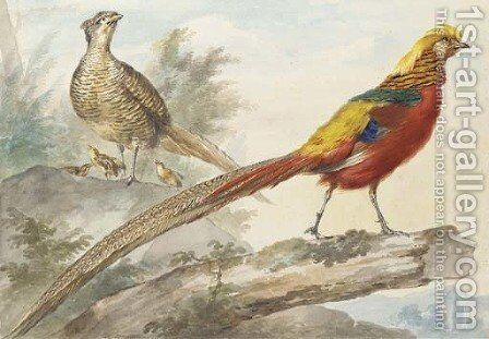 A Golden Pheasant standing on a log with a female pheasant and her chicks behind by Aert Schouman - Reproduction Oil Painting
