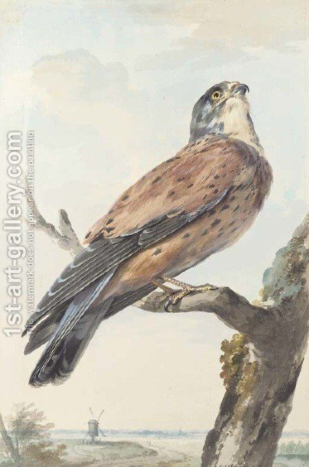A Kestrel perching on a branch, a windmill beyond by Aert Schouman - Reproduction Oil Painting