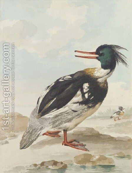 A Merganser standing on rocks with another behind by Aert Schouman - Reproduction Oil Painting