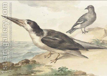 A skimmer and a dove on the sea shore by Aert Schouman - Reproduction Oil Painting