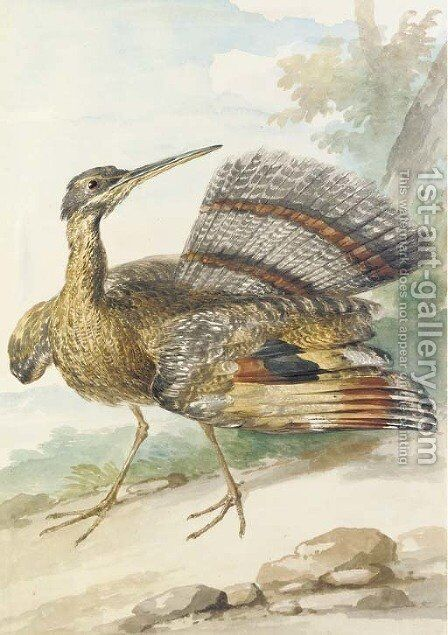 A Sun Bittern displaying by Aert Schouman - Reproduction Oil Painting