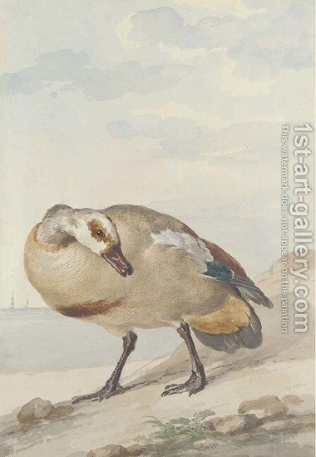 An Egyptian Goose on the shore by Aert Schouman - Reproduction Oil Painting