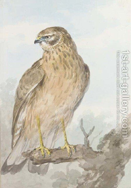 An Sparrowhawk on a branch, looking to the left by Aert Schouman - Reproduction Oil Painting