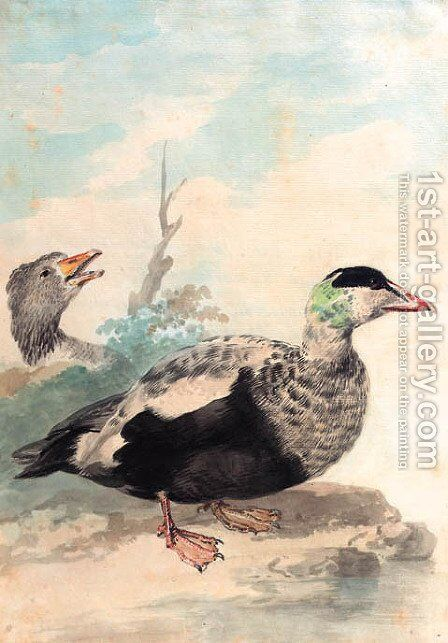 Eider ducks looking to the right at the edge of a pond by Aert Schouman - Reproduction Oil Painting