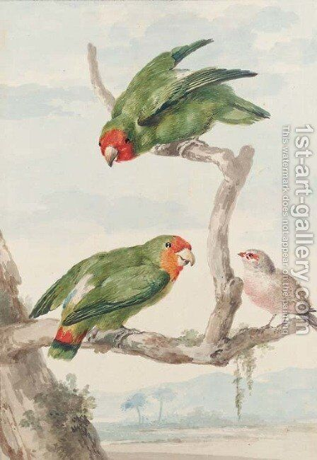 Two green parakeet and a Brazilian robin perching on a tree by Aert Schouman - Reproduction Oil Painting