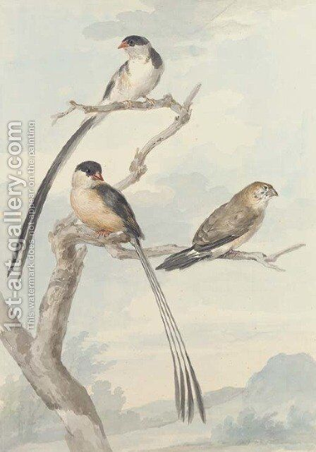 Two long-tailed tits and a bunting by Aert Schouman - Reproduction Oil Painting