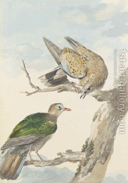 Two Turtle Doves on a tree by Aert Schouman - Reproduction Oil Painting