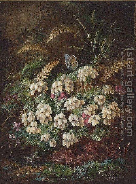 Heather and a butterfly by Albert Durer Lucas - Reproduction Oil Painting
