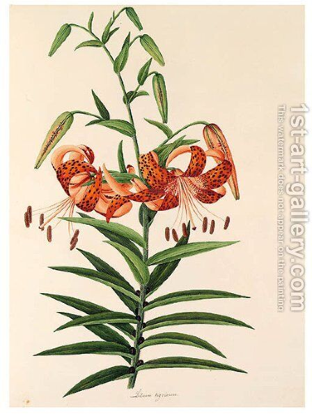 Flower by Anglo-Chinese School - Reproduction Oil Painting