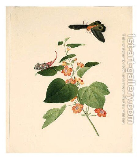 Flower and Butterflie by Anglo-Chinese School - Reproduction Oil Painting