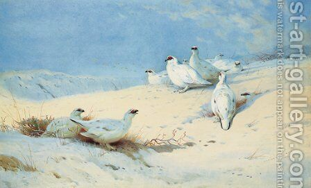'In the rays of the morning sun' Ptarmigan in the snow by Archibald Thorburn - Reproduction Oil Painting