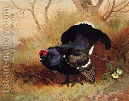 A Blackcock in a Woodland Clearing by Archibald Thorburn - Reproduction Oil Painting