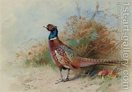 A cock pheasant 3 by Archibald Thorburn - Reproduction Oil Painting