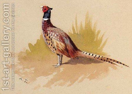 A Cock Pheasant, a study by Archibald Thorburn - Reproduction Oil Painting