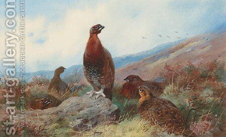 A Covey of Red Grouse on a Moor by Archibald Thorburn - Reproduction Oil Painting
