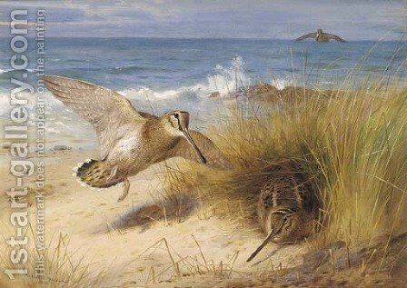 A haven of rest Woodcock on the shore by Archibald Thorburn - Reproduction Oil Painting