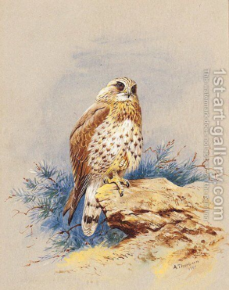 A Kestrel perched on a Rock by Archibald Thorburn - Reproduction Oil Painting