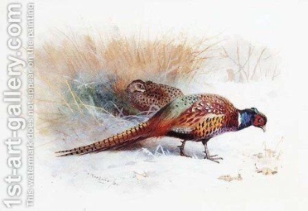 A Pair of Pheasants by Archibald Thorburn - Reproduction Oil Painting