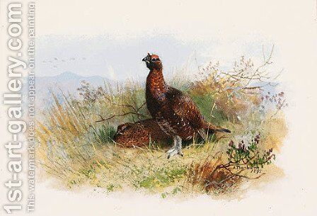 A Pair of Red Grouse by Archibald Thorburn - Reproduction Oil Painting