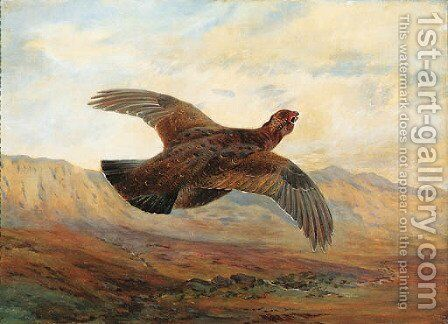 A Red Grouse in flight above Moorland by Archibald Thorburn - Reproduction Oil Painting