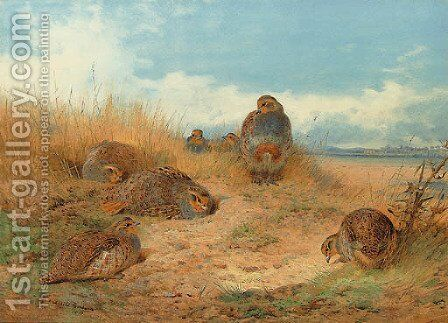 Basking in the noonday Sun A Covey of Grey Partridge by Archibald Thorburn - Reproduction Oil Painting