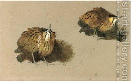 Bittern studies by Archibald Thorburn - Reproduction Oil Painting