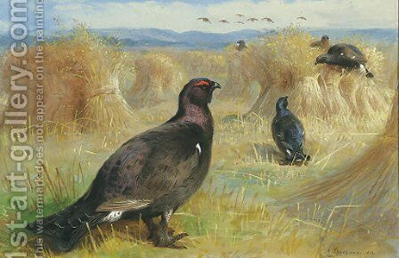 Blackcock amongst the corn stookes by Archibald Thorburn - Reproduction Oil Painting