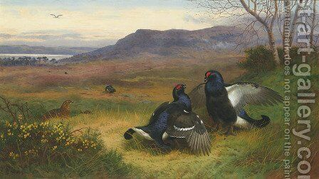 Blackcock at the Lek by Archibald Thorburn - Reproduction Oil Painting