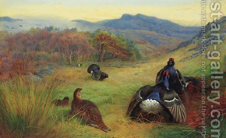Blackcock fighting by Archibald Thorburn - Reproduction Oil Painting