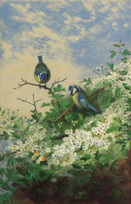 Blue tits and an orange tip butterfly among hawthorn blossom by Archibald Thorburn - Reproduction Oil Painting