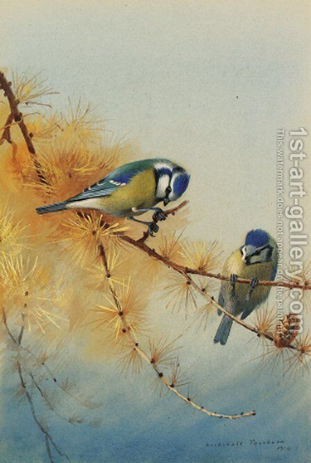 Blue Tits on the branch of a fir tree by Archibald Thorburn - Reproduction Oil Painting