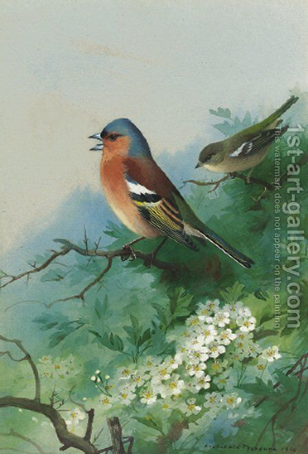 Chaffinches among hawthorn by Archibald Thorburn - Reproduction Oil Painting