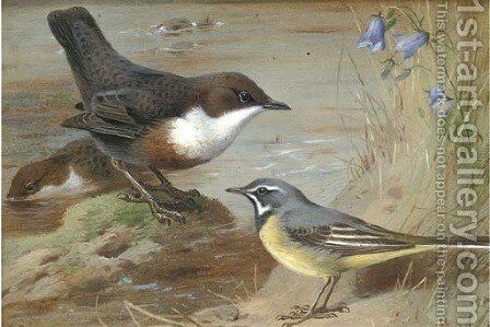 Dippers and a grey wagtail on the bank of a stream by Archibald Thorburn - Reproduction Oil Painting