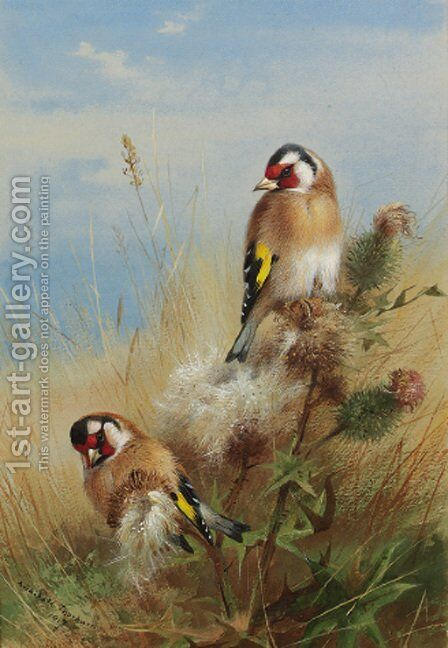 Goldfinches among thistles by Archibald Thorburn - Reproduction Oil Painting