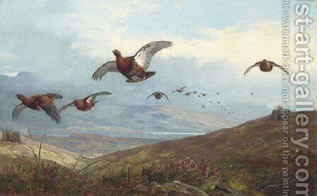 Grouse shooting by Archibald Thorburn - Reproduction Oil Painting
