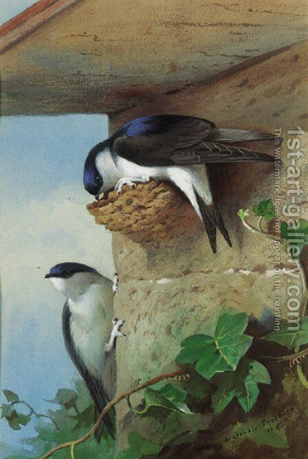 House martins, on a nest beneath the eves by Archibald Thorburn - Reproduction Oil Painting