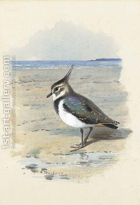 Lapwing or Peewit by Archibald Thorburn - Reproduction Oil Painting