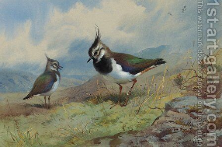 Lapwings in a rocky landscape by Archibald Thorburn - Reproduction Oil Painting