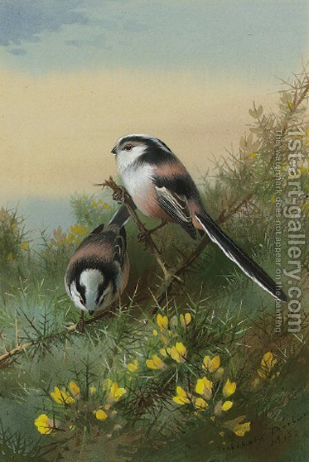 Long-tailed tits on gorse by Archibald Thorburn - Reproduction Oil Painting