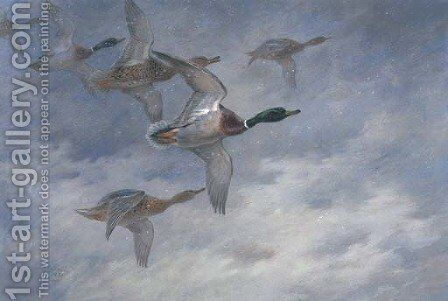 Mallard in flight by Archibald Thorburn - Reproduction Oil Painting