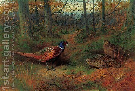 On the ride A cock and two hen pheasant in autumn by Archibald Thorburn - Reproduction Oil Painting