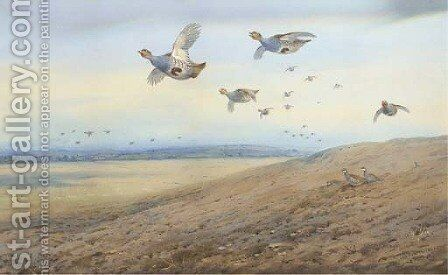 Partridge in flight 2 by Archibald Thorburn - Reproduction Oil Painting