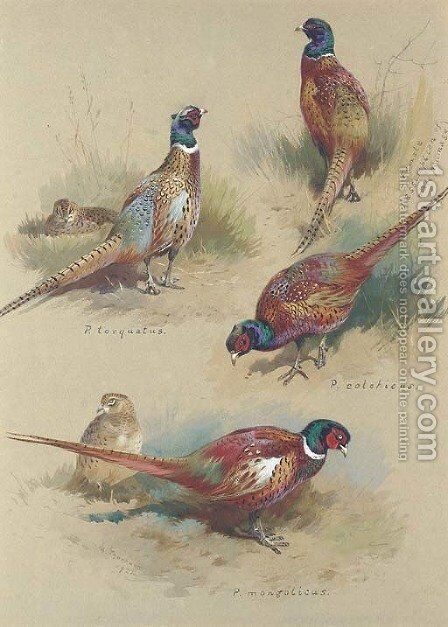 Pheasants by Archibald Thorburn - Reproduction Oil Painting