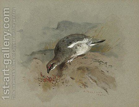 Ptarmigan on a rock by Archibald Thorburn - Reproduction Oil Painting
