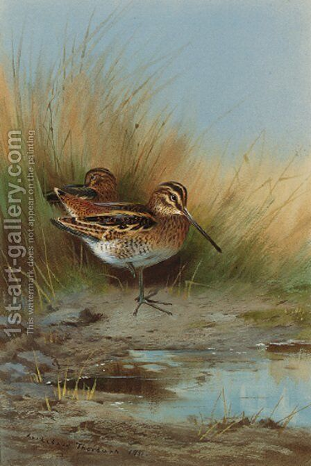 Snipe at the water's edge by Archibald Thorburn - Reproduction Oil Painting