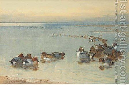 Teal and Widgeon by Archibald Thorburn - Reproduction Oil Painting