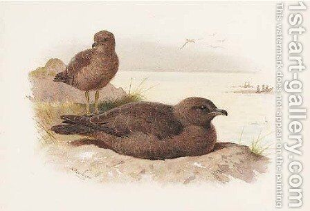 Twisted-tailed skua Lestris Pomarinus by Archibald Thorburn - Reproduction Oil Painting