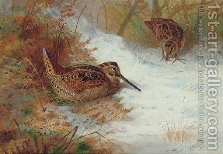 Woodcock in snow by Archibald Thorburn - Reproduction Oil Painting