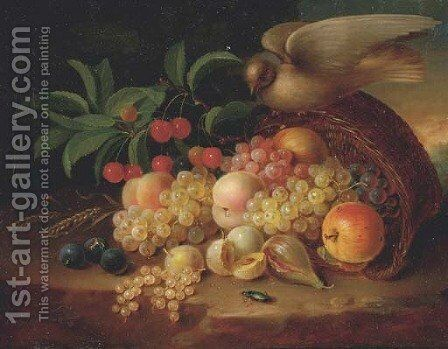 Peaches, cherries, grapes, an apple, plums and other fruit and a dove perched on a wicker basket by (after) George Forster - Reproduction Oil Painting